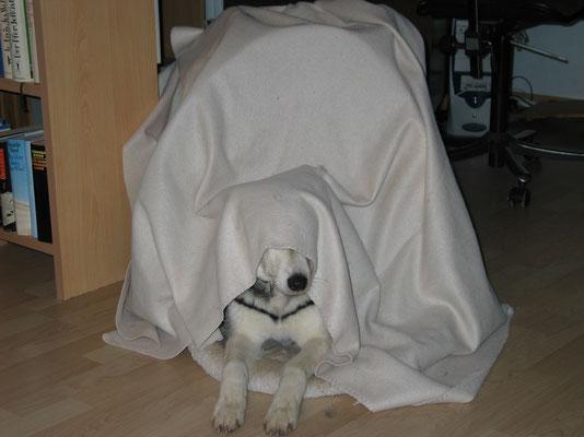 Borea; Pssst, wir spielen Versteckis!
