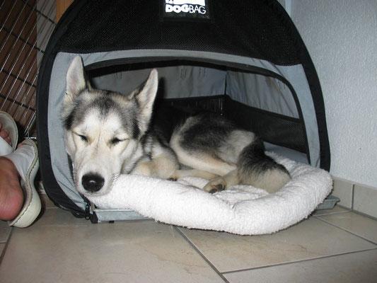 """Borea ist ganz neu bei mir und hat soeben gelernt, dass man in dem """"Chrutzli"""" herrlich geborgen schlafen kann."""