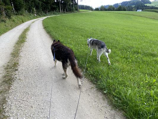 """31.8.2021; Berg""""rennen"""" mit meinem Zwerg"""