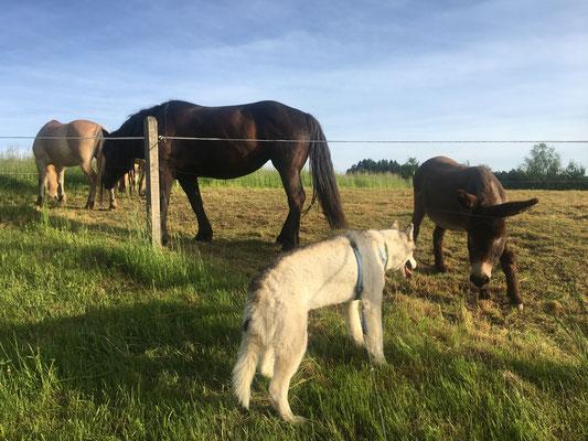 Neue Nachbarn kennengelernt...