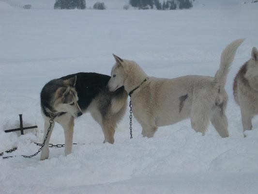 Snow macht seiner alten Freundin Borea Avancen...