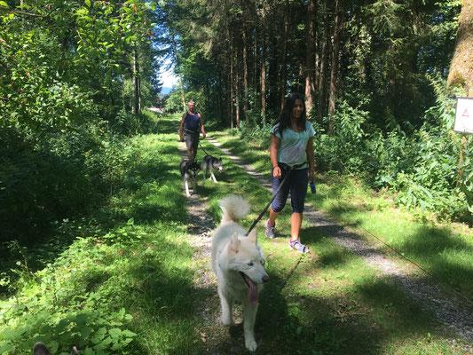 Skeena-Schätzi, mein Herrchen und ich; vor uns läuft Noemi mit Blizzi.