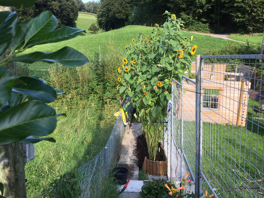 Plattenweglein, wo sonst nur Gerümpel wachsen würde, das immer wieder gemäht werden müsste.
