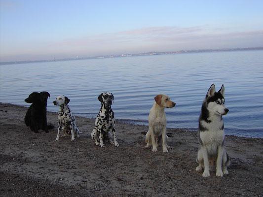 Damals an der Elbe, bei Sandra und unseren Kumpels...