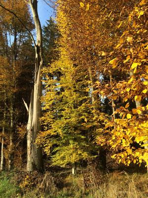 Sich an einem Ast voller goldgelber Herbstblätter erfreuen, schenkt tieferes Glück, als ein Sack Goldstücke zu besitzen.