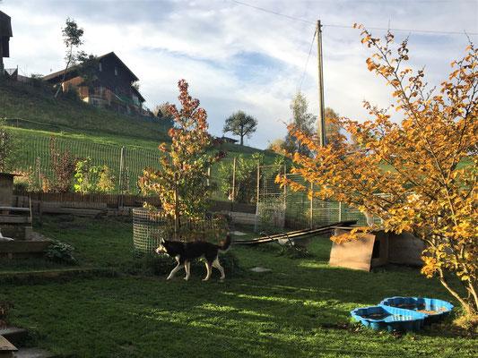 Den Herbst meines Lebens im schönen Gehege herum zu stiefeln, mit meinen Kumpels das Zusammensein zu geniessen; so erhoffe ich, auch dieses Jahr noch erleben zu dürfen.