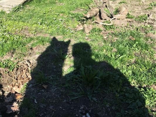 Schatten-Selfi, Merkur mit Frauchen