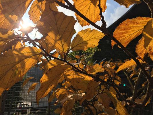 Farben, Formen und die milde Luft ganz klar, legt uns der Herbst ein wahres Schauspiel dar.