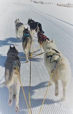 White Mountain - wenn du plötzlich keinen Horizont mehr siehst, der Schnee kommt quer auf dich zu, die Augen verkleben sich, die Ohren werden mit Schnee gefüllt, du hörst die Stimme deines Mushers nicht mehr - einzig deine Nase leitet dich