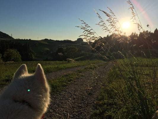 Zum Schluss fanden wir den Sonnenuntergang und für das Bild durfte ich sogar im Vordergrund bleiben. Ich wurde ganz still, ob der Grösse dieses herrlichen Naturwunders, ehrlich.