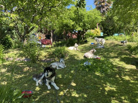 27.5.2021; zu Besuch bei Claudia in Basel. Ihren Garten, dieses Stückchen Paradies durften wir alle erleben und geniessen