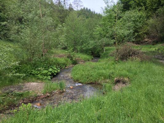 Wie ein kleiner Yukon schlängelt sich der Bach durch das Tal, grandios zum abkühlen, spielen und entdecken.