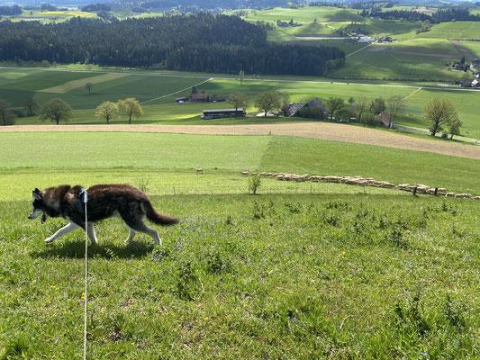 16 Jahre, 6 Monate, 12 Tage; und zum Herdenschutzhund mutiert, oder was?
