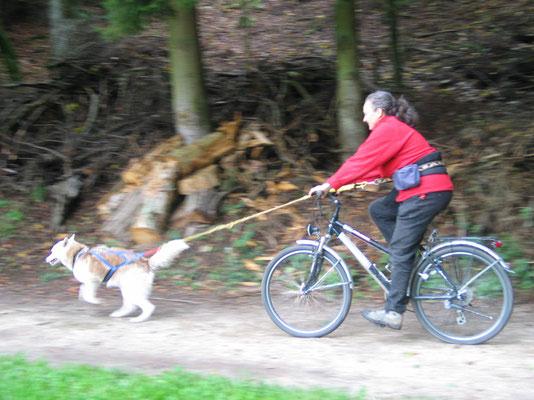 Frauchen am Fahrrad durch die Gegend ziehen