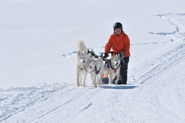 Das Jüngelchen Blizzi (vorne links) soll von Snow lernen, wie man`s richtig macht (Foto A. Eberle)
