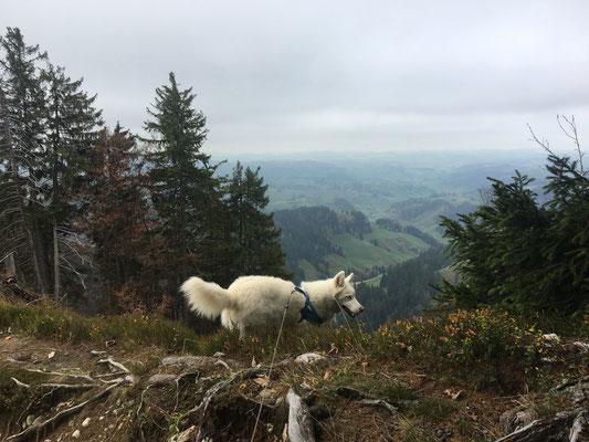 Lange Wanderungen machen, über Berg und Tal, so wie damals auf den Napf. Das passt auf jeden Fall zu mir.