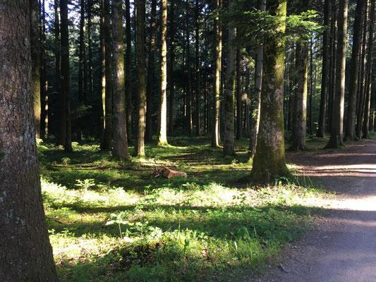 Zurück in den herrlichen Wald, das ist unsere Zone. Da sind wir umgeben von hunderten von Düften...