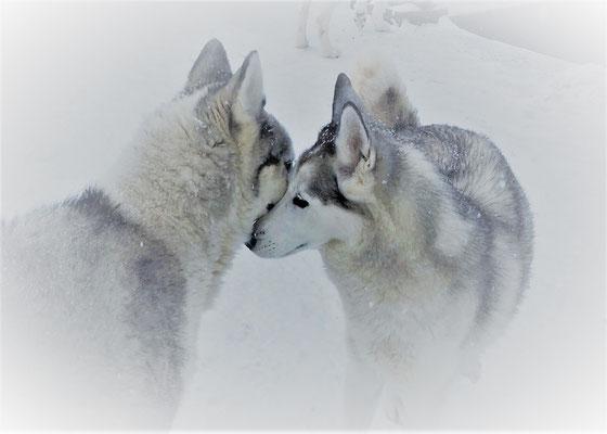Yukon und Nele