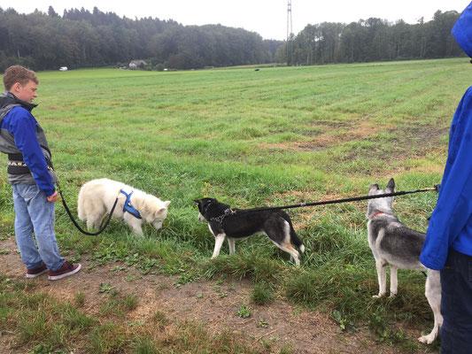 Am Posten 1 geht es um Eckpfeiler in der Hundeerziehung.