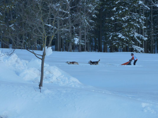 On de Trail durch Feld und Wald (Foto L. Vetter)