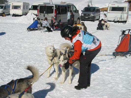 Frauchens erstes Schlittenhunderennen (Foto L. Vetter)
