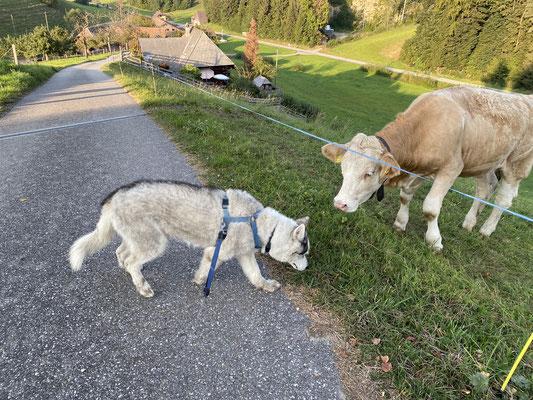 Den Nachbarn tschau sagen