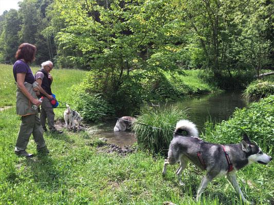 Durch ein ein wunderschönes Tal sind wir gezogen, mit einem Bach, wo wir immer wieder drinn rumspritzen und baden konnten.