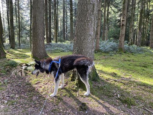 16 Jahre, 10 Monate und 5 Tage; musste heute im Bergwald wieder mal nach dem Rechten sehen.