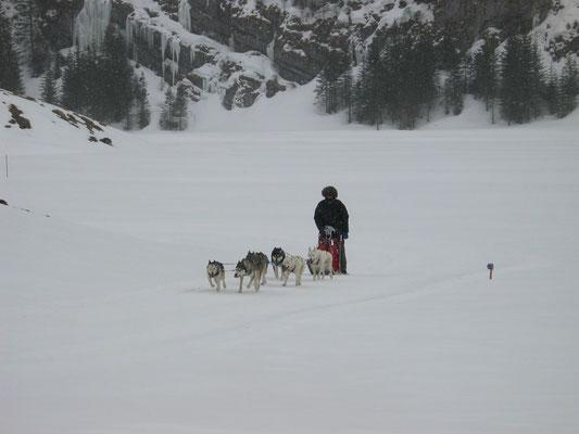 Als Leaderin durch Eis und Schnee für ihr Herrchen, das ist ihr Lebenselixier.