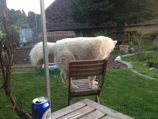 Die Geschichte von Blizzi dem grossen Bär, auf dem kleinen Stuhl...