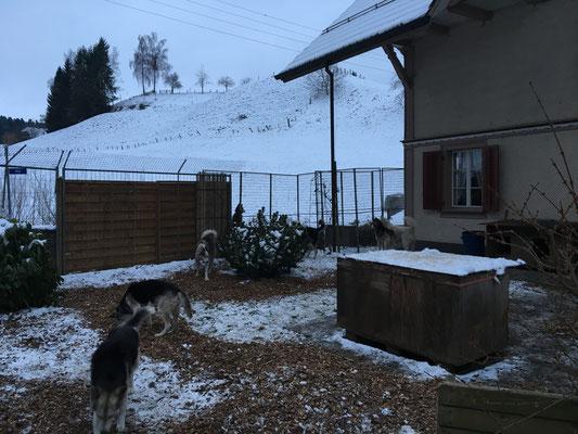 Aber insgesammt ist es schon kälter hier und hat auch mehr Schnee. Muss wohl doch näher an Alaska sein -
