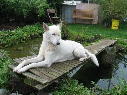 Auf dem Brücklein lag er gerne, aber im Wasser habe ich ihn in all den Jahren nie gesehen. Wenn das Wasser allerdings die Form von Schnee aufwies...