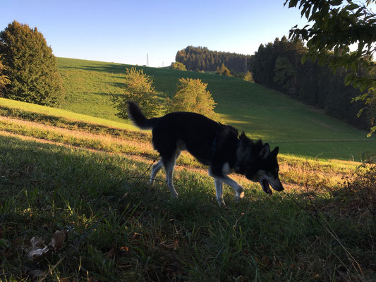 In der Abendsonne