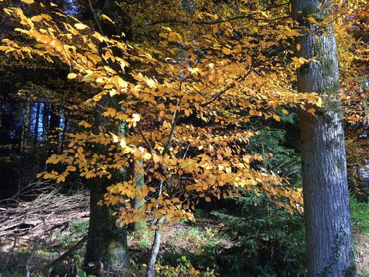 Jeder Herbst hinterlässt in unseren Herzen das Gefühl, der Schönste gewesen zu sein