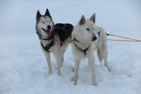 Snow mit Skeena, ein süsseres Leaderpärchen gibt es nicht.