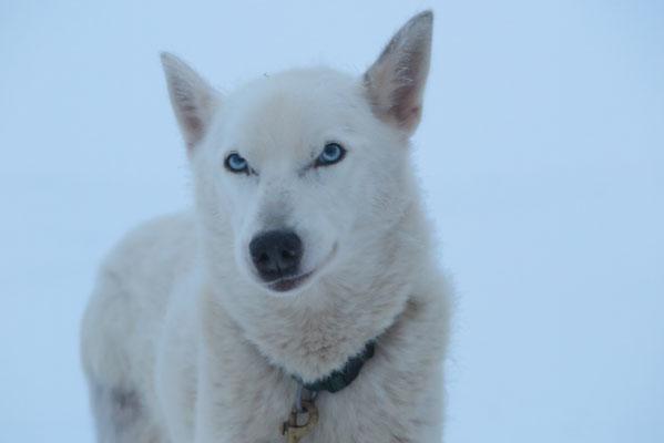 Snow, du lächelst mich an, was du wohl denken magst?