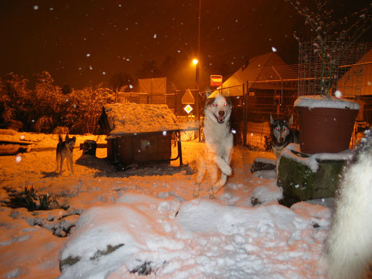 Spirit-Dog`s in einer zauberhaften Winternacht