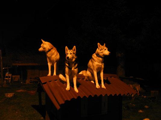 Die Menschen sagen, nachts seien alle Katzen schwarz - aber wir sind eben Husky`s und deshalb helle...