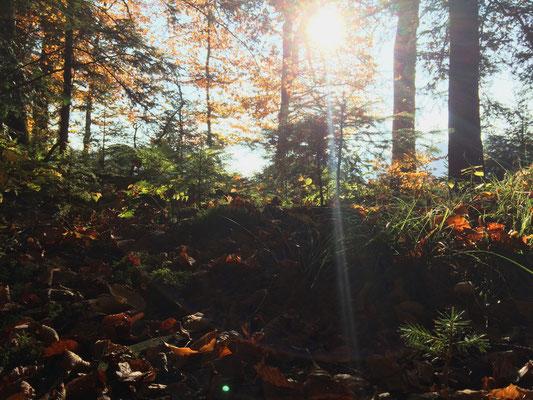 Herbstlicher Waldboden mit Formen und Farben wie es nur die Natur hervor zu bringen vermag.