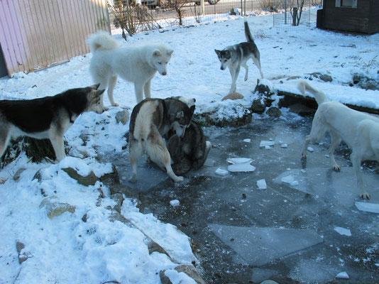 Wir entdecken etwas völlig Neues in unserem Garten: Eis-Kunst-Spielen, bei 12°-