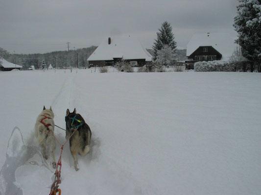 50 cm Neuschnee und den Trail z.T. selber gespurt; ich werde von Snow und Eagle sicher nach Hause gezogen.