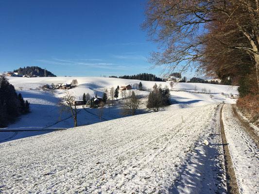 Wunderschönes Revier hast du für uns ausgesucht Frauchen, dieser Schnee, diese Kälte, diese Sonne...