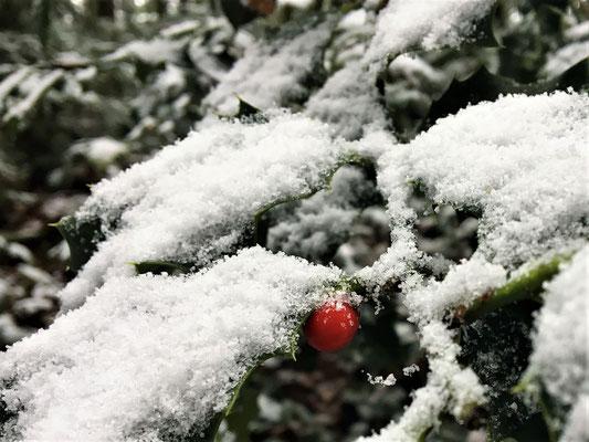 Winterwunder...