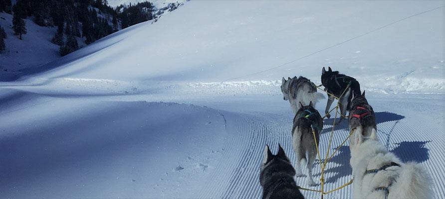 Rainy Pass - wir stemmen die Pfoten in den Schnee, ein Schritt vor den andern gesetzt, langsam aber konstant den Pass hinauf - bald wird die rasante Abfahrt folgen