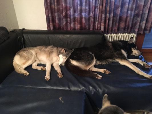 Und dann am Ende eines harten Tages, mit ihm auf dem Sofa kuscheln und er lässt mich...