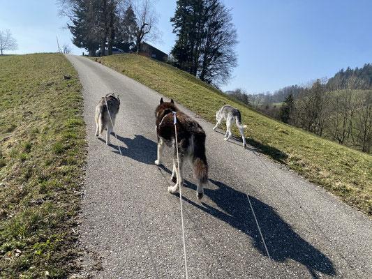 2.3.2021; bin wieder mal am Bergsteigen, mit meinen zwei Lady`s