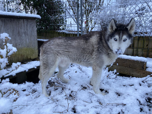 Amaroks Markenzeichen im Winter: Eine schneebeladene Nase
