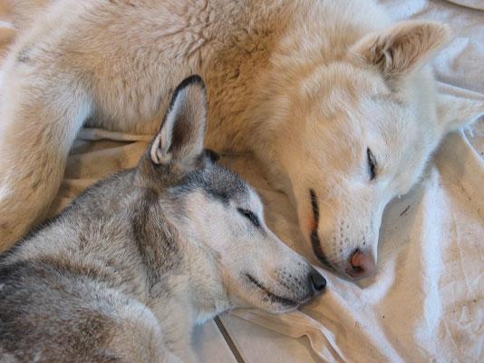 Zusammen träumen; Zwergli und Blizzard