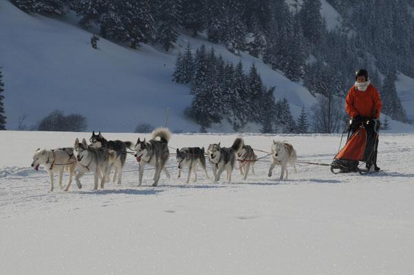 """Snow führt das """"Nothilfegespann"""" über den Trail. Sechs der acht Hunde sind aus der Nothilfe-Polarhunde Freudenstadt übernommen."""