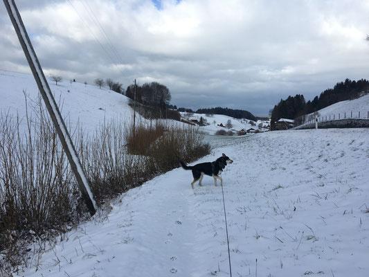 mit dem gleichnamigen Dörfchen im Blick. Diese Schneelandschaft, diese Wolken am Winterhimmel und die vielen verschiedenen Fährten in der Nase -